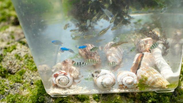 読谷村ニライビーチの魚