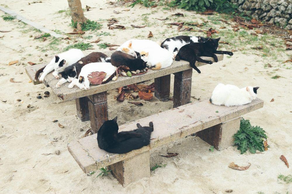竹富島のねこ