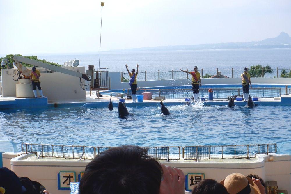 美ら海水族館のイルカショー