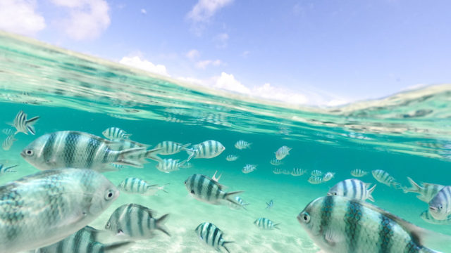 大泊ビーチの魚