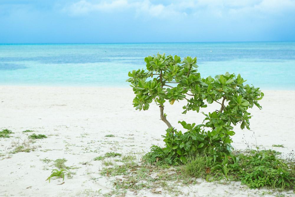 コンドイビーチの撮影スポット