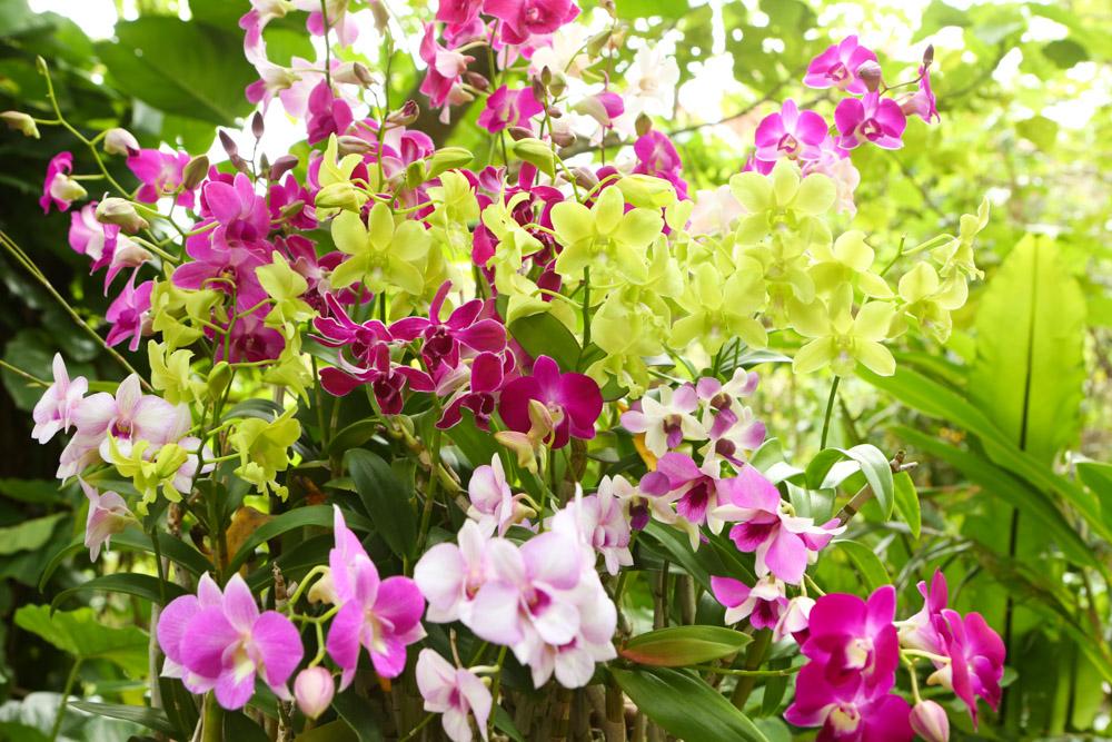 美しい花が楽しめる