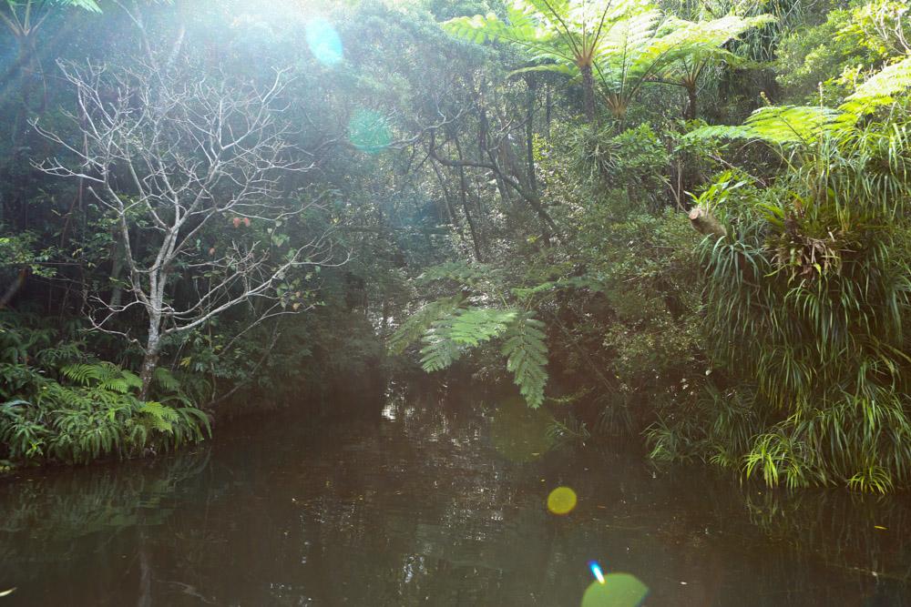 クルーズで見られるジャングル