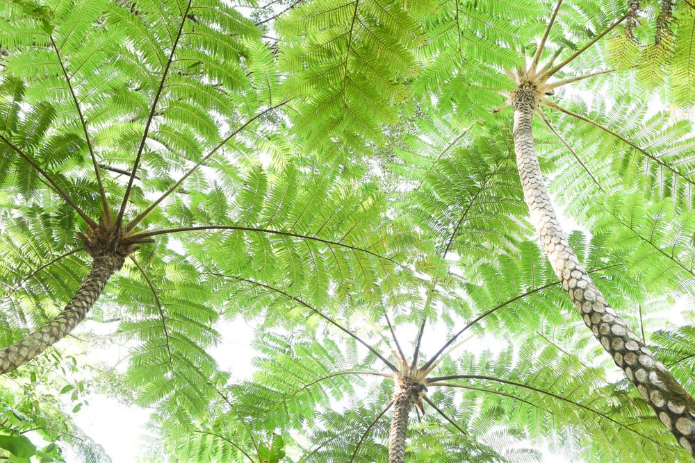 ジャングルのような自然