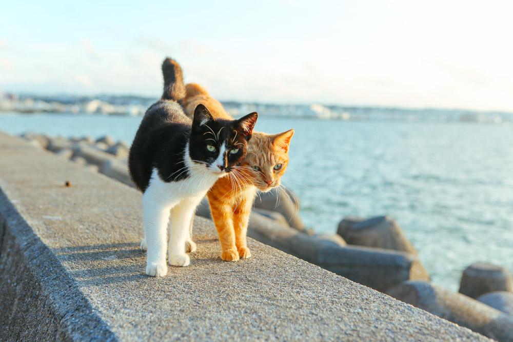 デートする猫