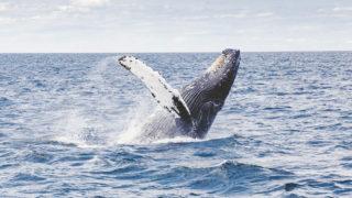 沖縄の北谷で見たクジラ