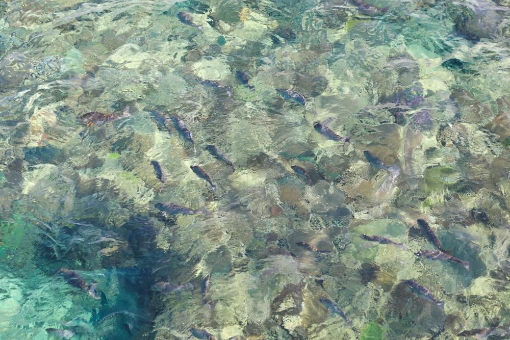 えさに集まる魚