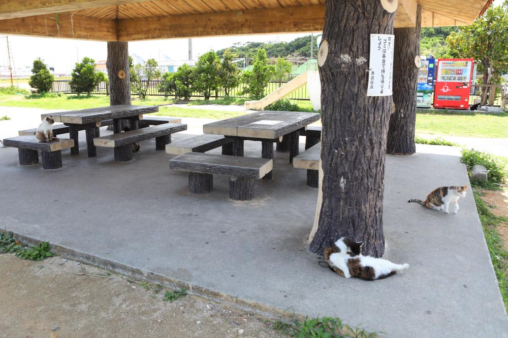 東屋で寝るネコ