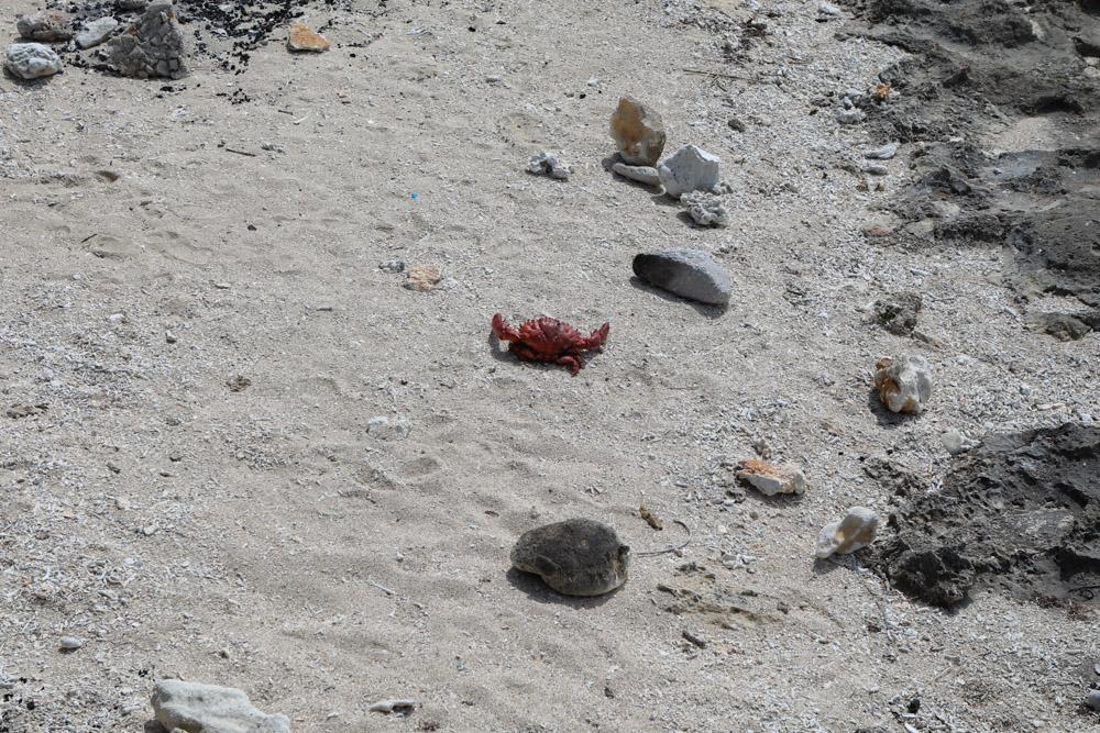 奥武島ビーチのカニ
