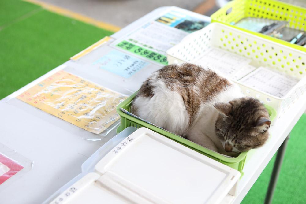 天ぷら店の猫