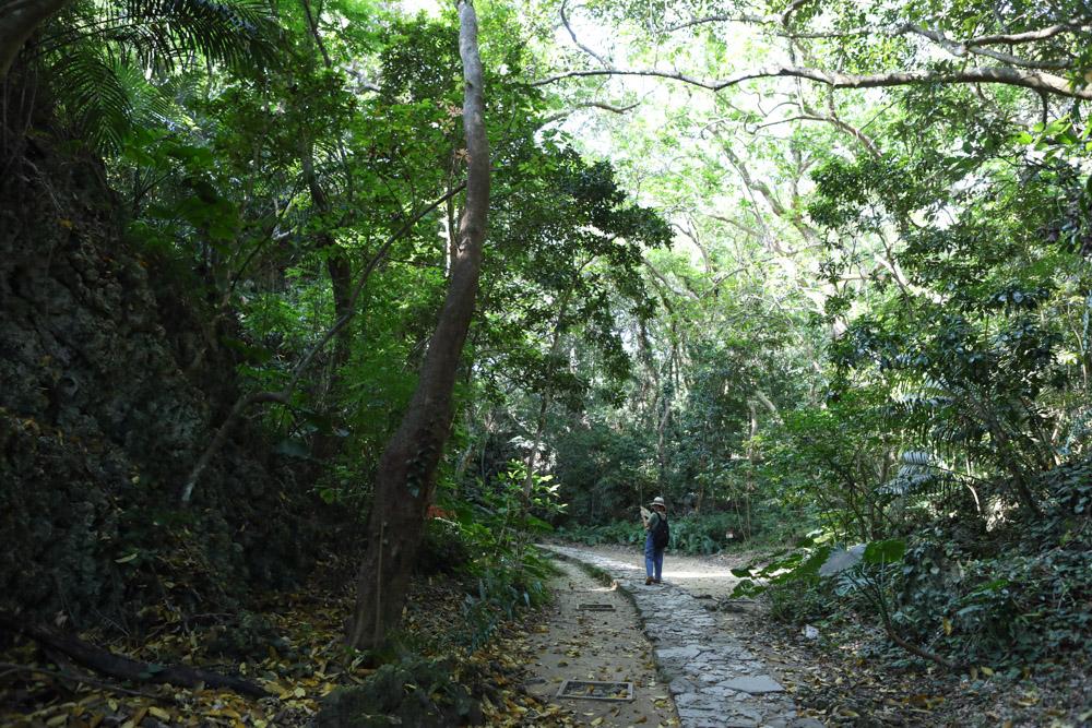 木が生茂る道