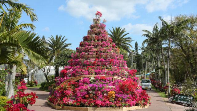 東南植物楽園のインスタ映えスポット