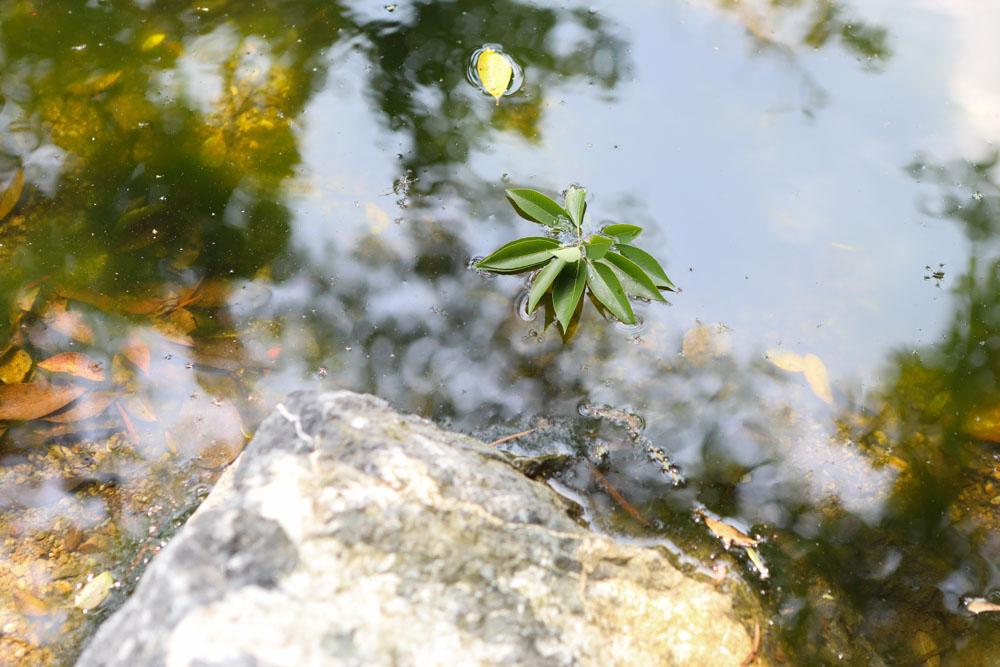 川に落ちた葉っぱ