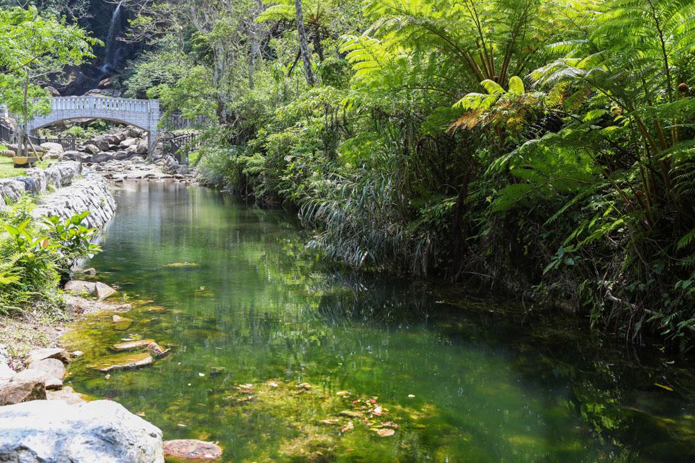 水辺の植物と小川