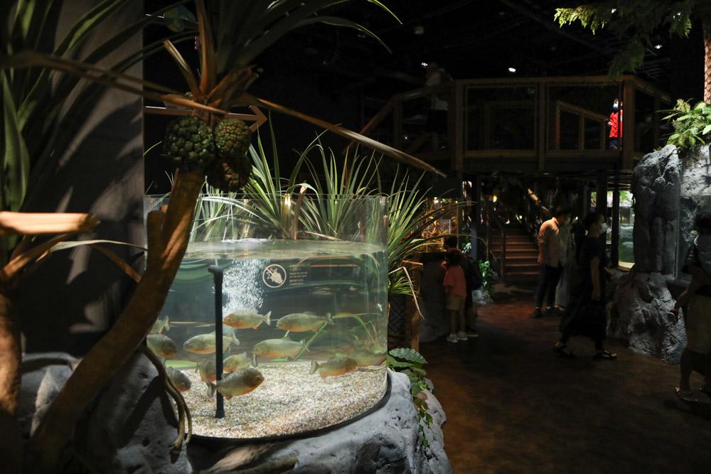 亜熱帯の森のような水族館