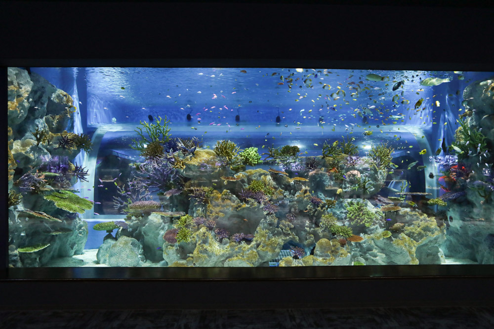 沖縄のカラフルな魚