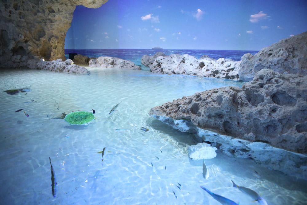 琉球石灰岩のある海