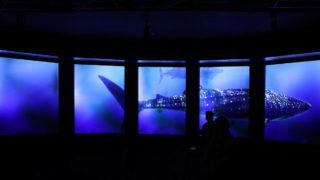 沖縄のDMMかりゆし水族館 アイキャッチ