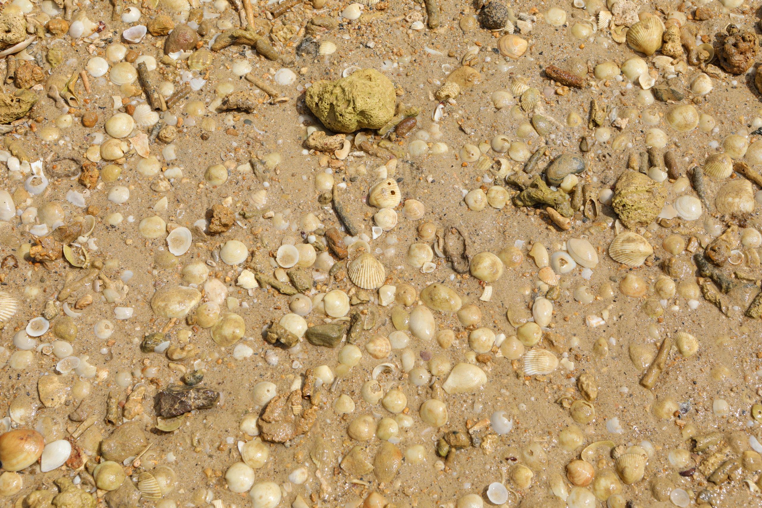 サンドダラービーチの貝殻