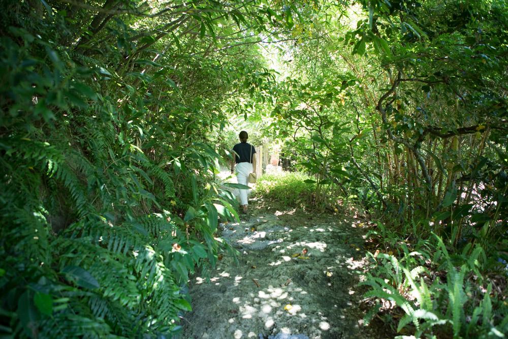熱帯の植物が自生する小道