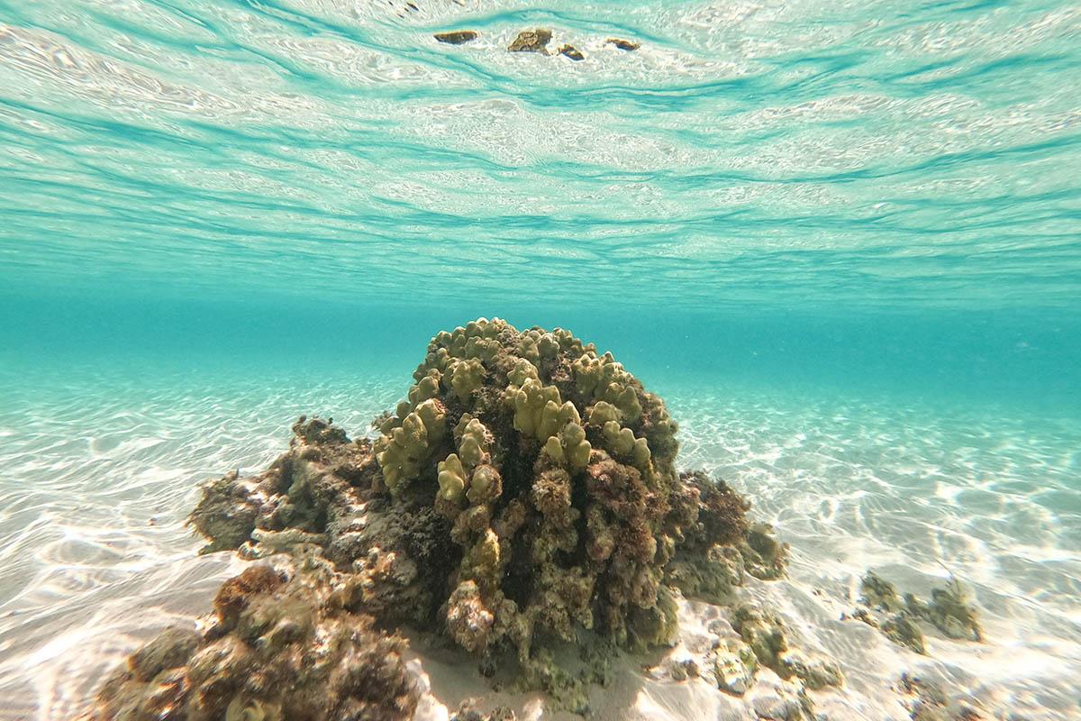 17エンドの水中写真(珊瑚)