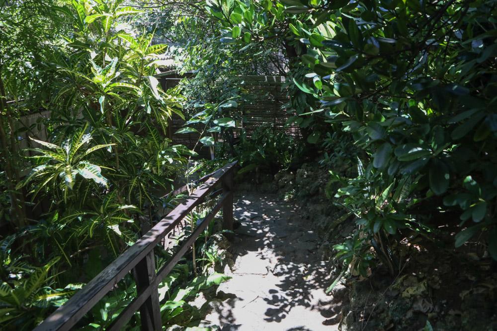 木が生茂る階段