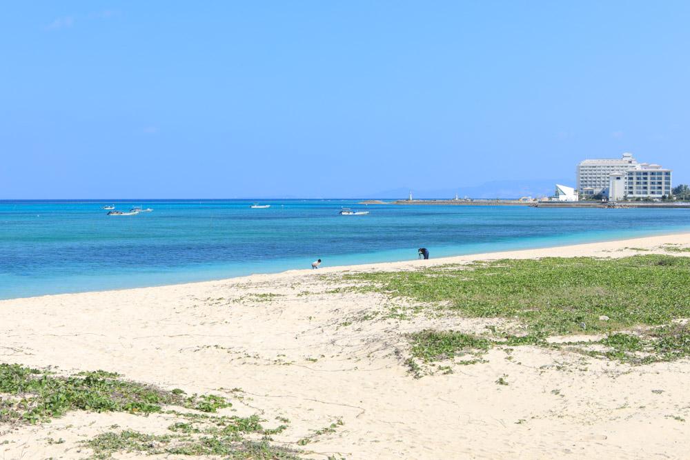 砂浜のハマヒルガオ