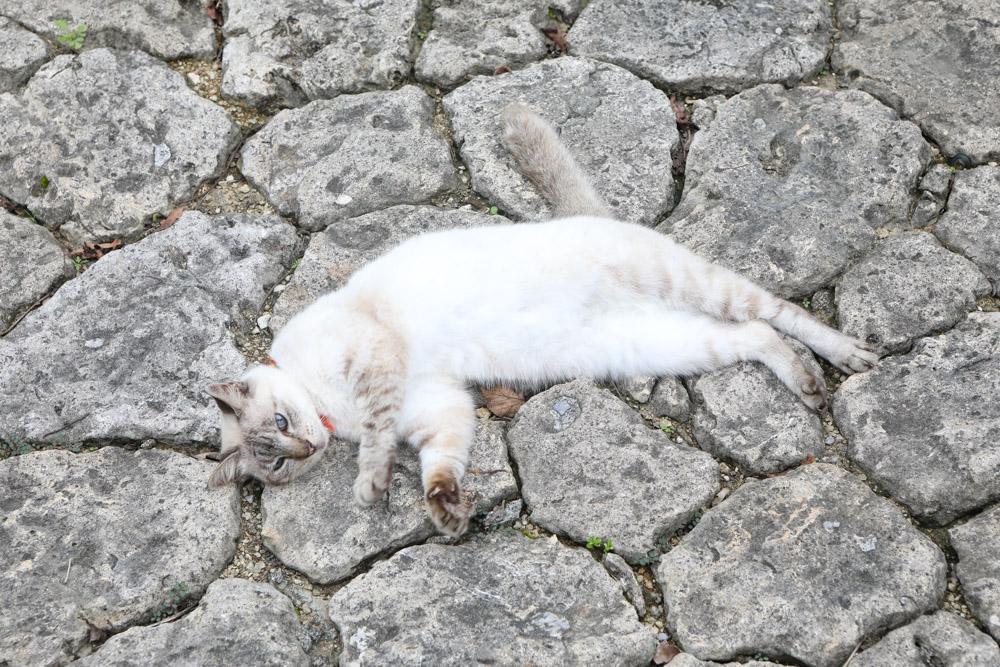 石畳で寝るネコ