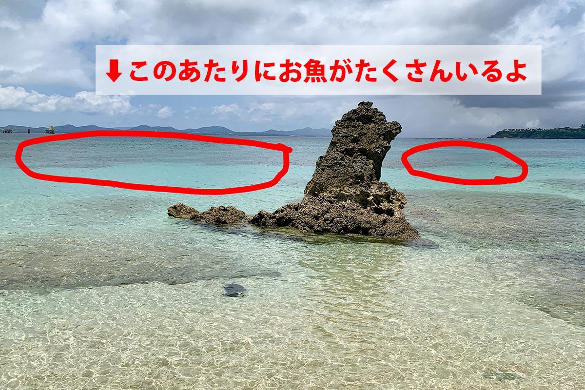 目印の琉球石灰岩