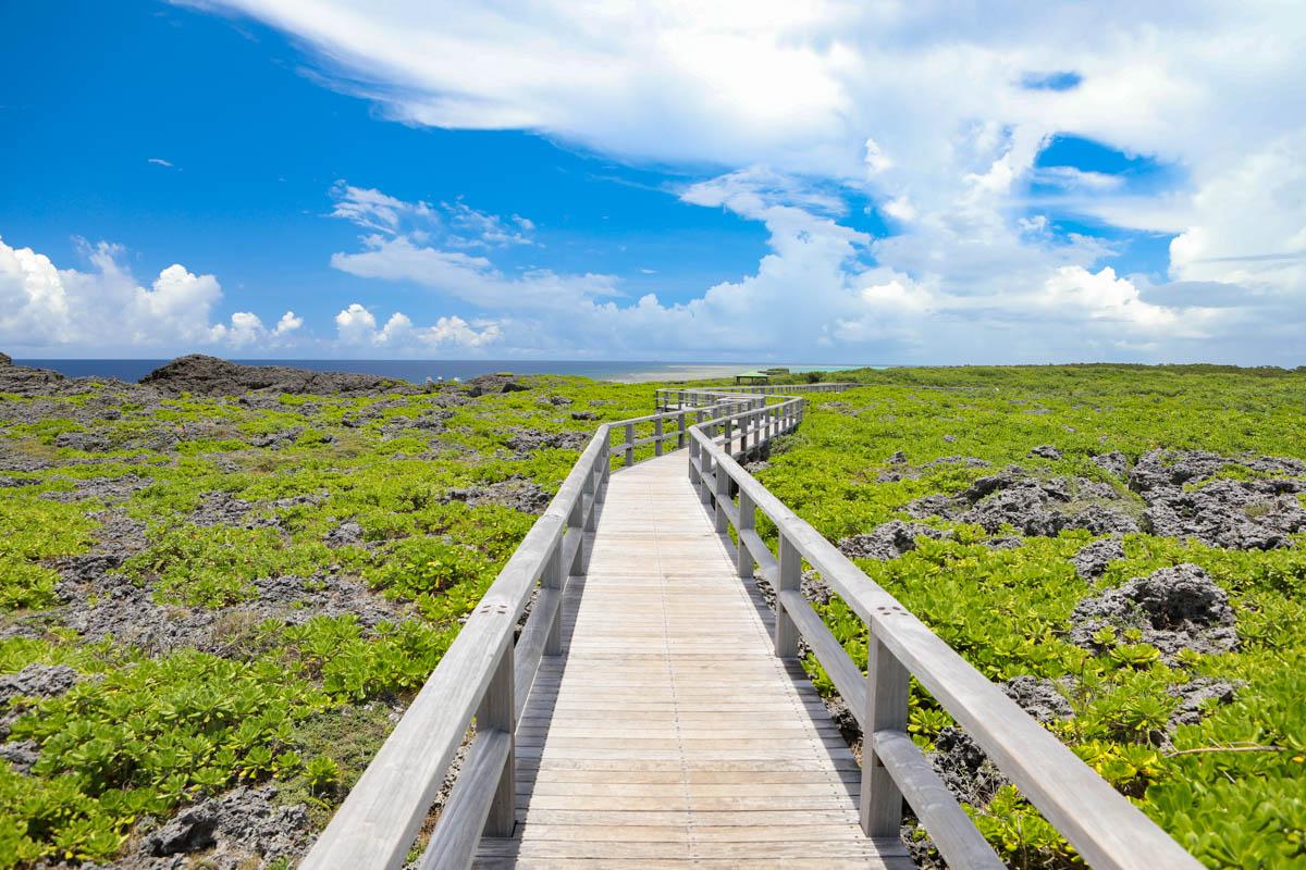 晴れた日の自然の中の歩道橋