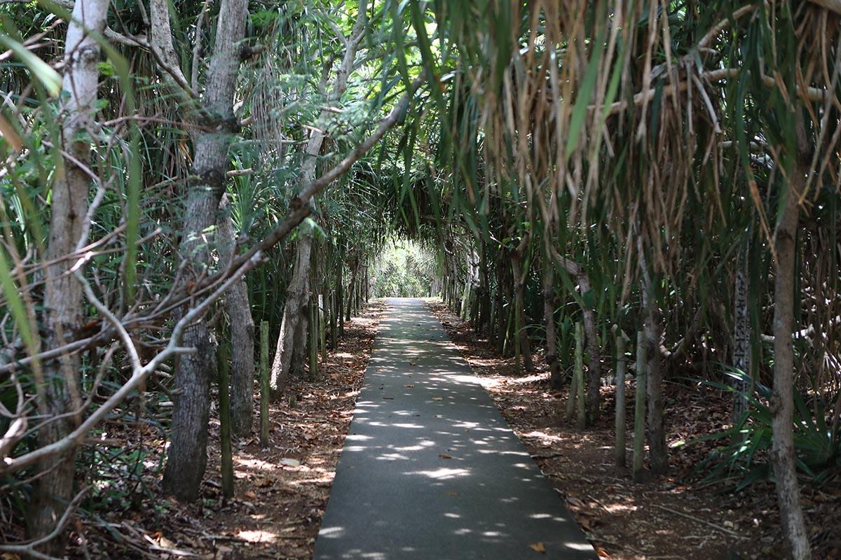ちょいと薄暗い木々が生茂るグリーントンネル