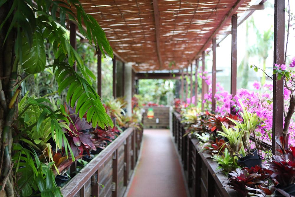 亜熱帯植物の道