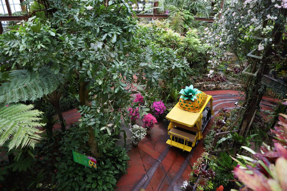 パイナップルパークの植物園