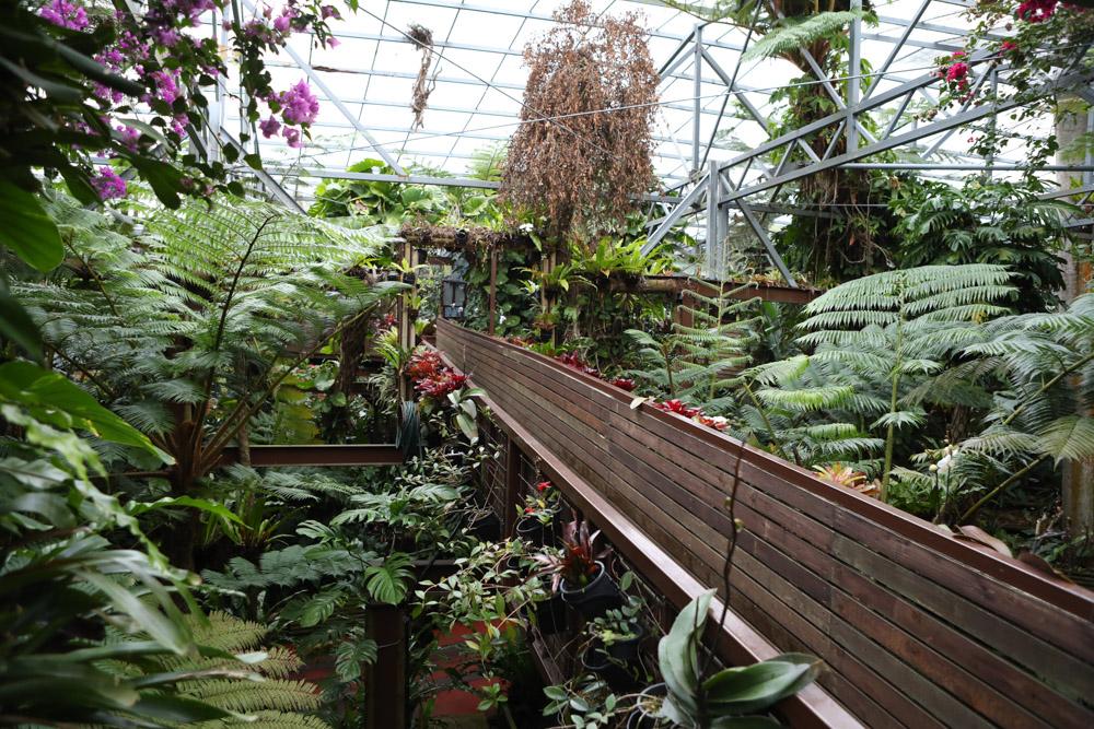 植物園の遊歩道