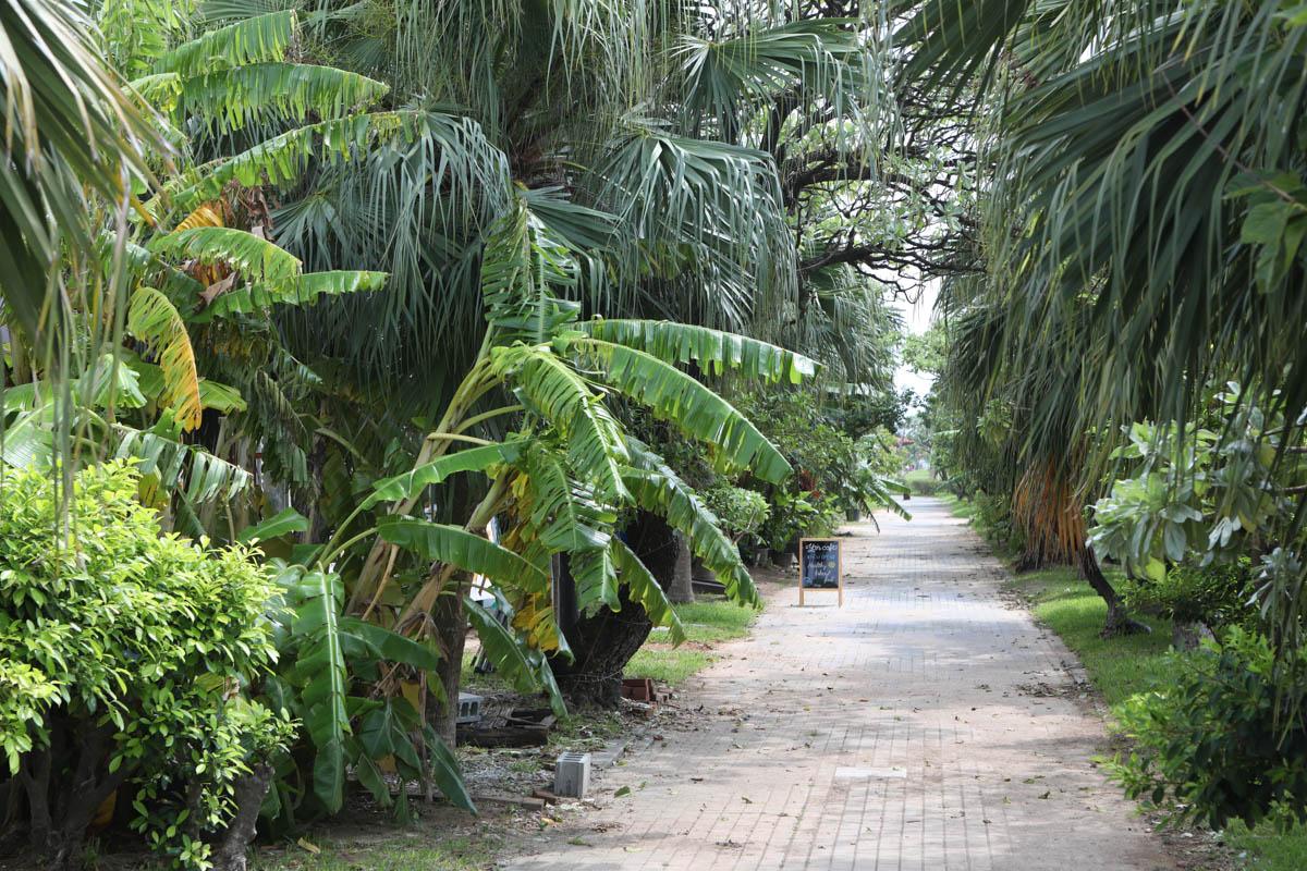 アラハ公園の道