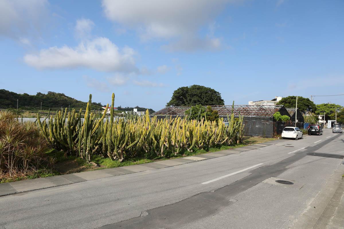 女子旅に人気の沖縄サボテン