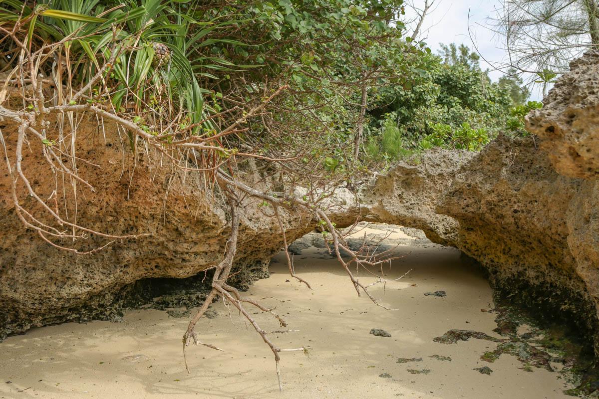 琉球石灰岩のアーチ(トンネル)