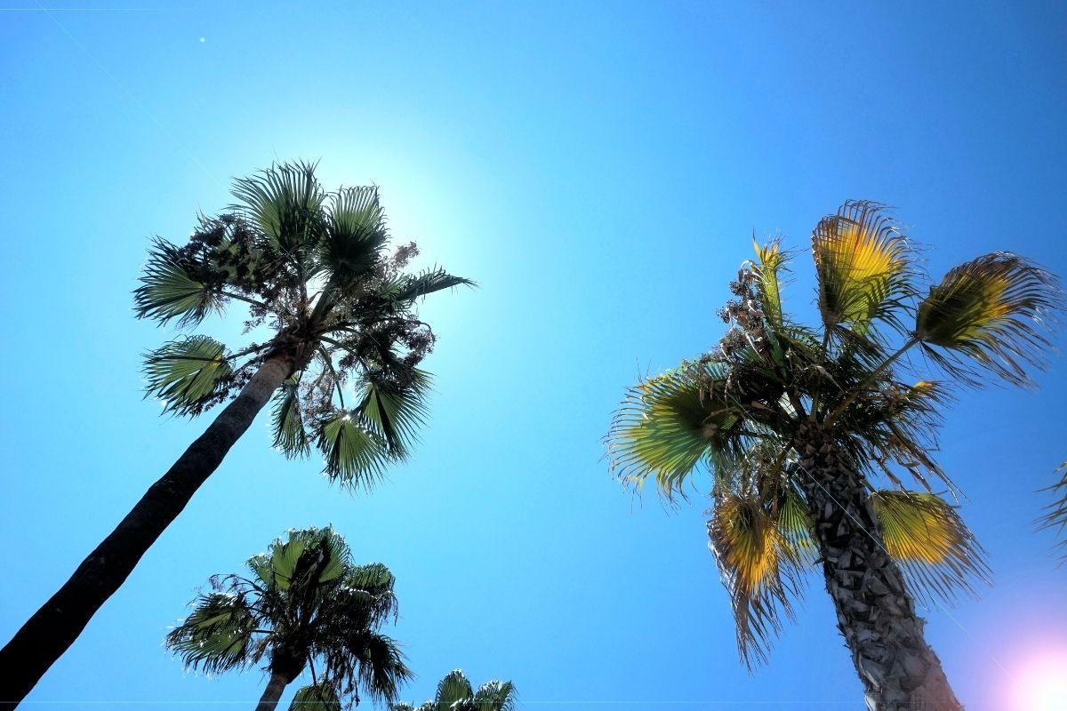 沖縄の日差し