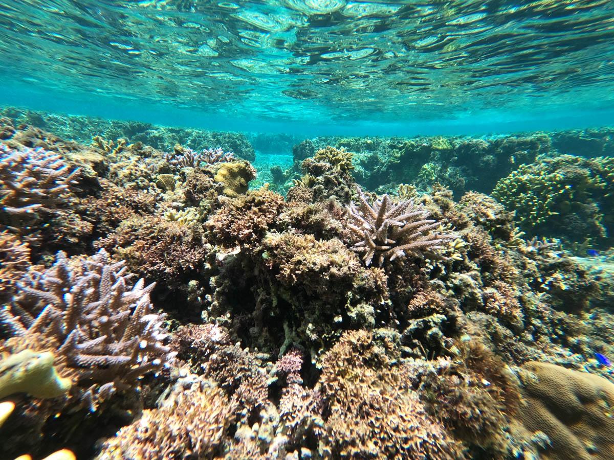 サンゴのある海