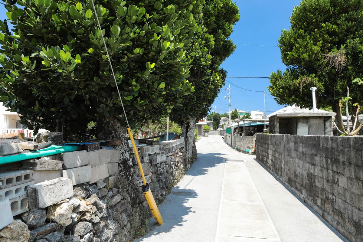 フクギの木と細い路地