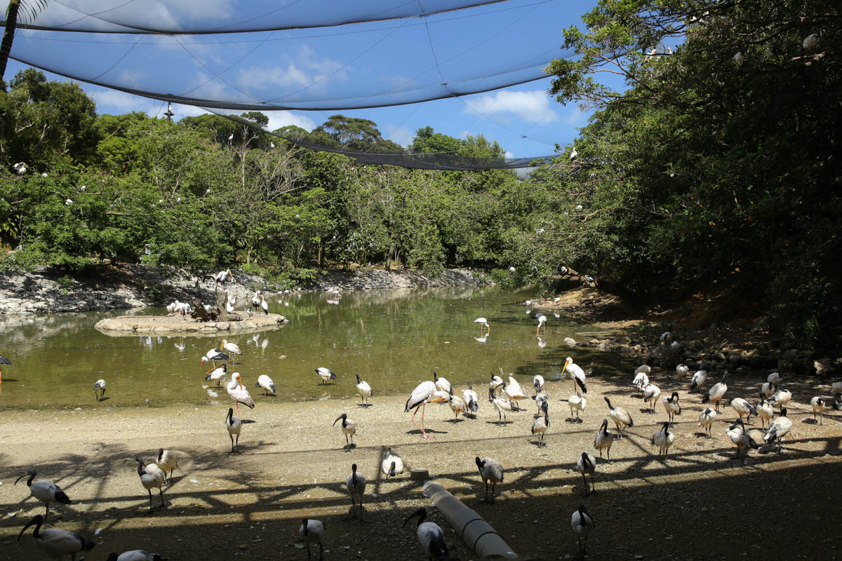 フラミンゴの池