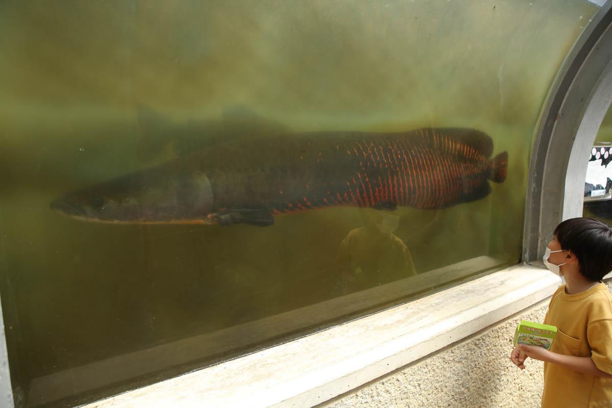 熱帯の大型魚観測ができるトンネル