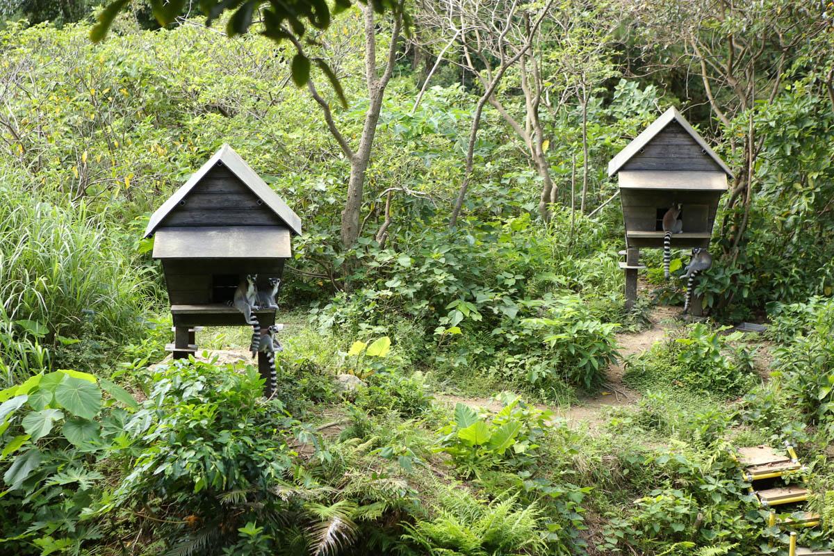 シロビタイレムールの小屋